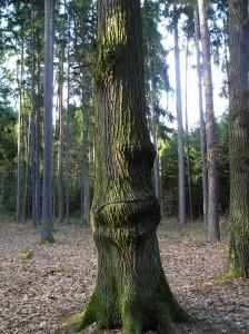 stromy-u-strelnice1.jpg