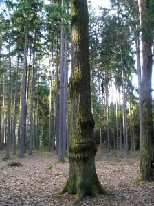 stromy-u-strelnice2.jpg
